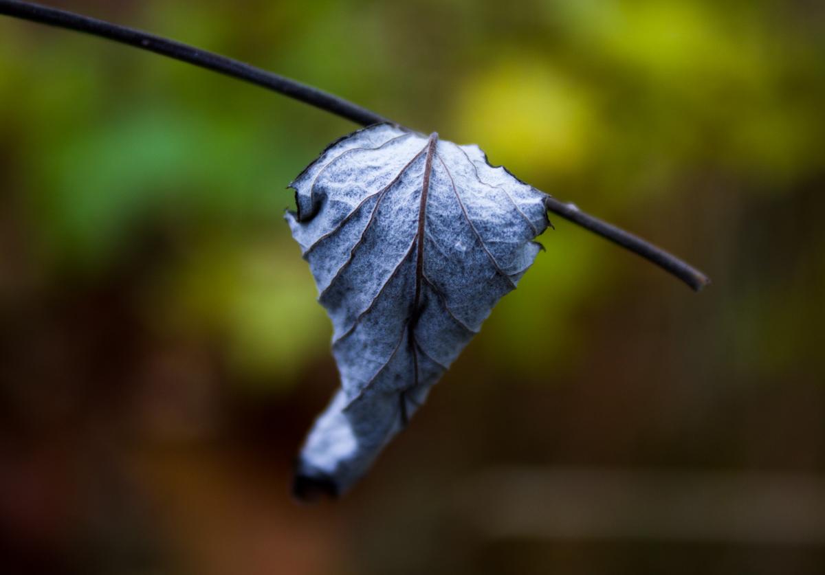 Macro // Leaf