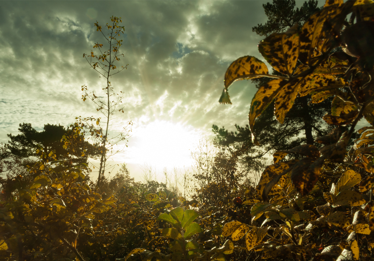 Sunrise // Woods